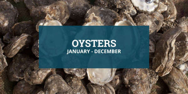 Louisiana Seafood Oyster Season