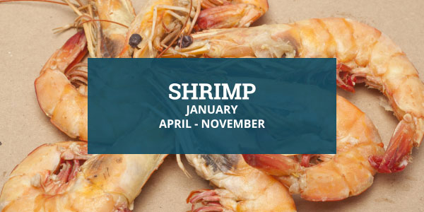 Louisiana Seafood - Shrimp Season