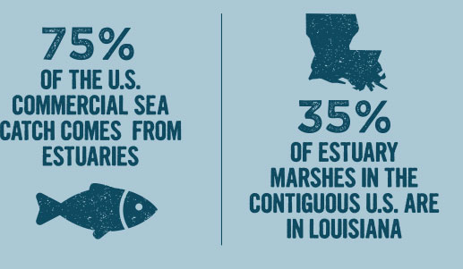 75% of U.S. commercial sea catch comes fromestuaries/35% of estuary marshes are in Louisiana
