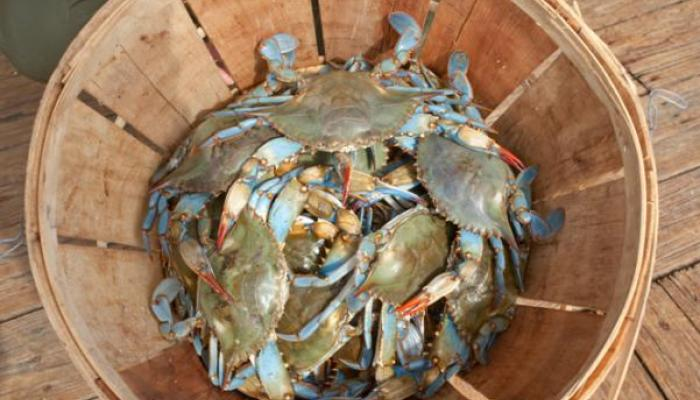 Louisiana Crabs